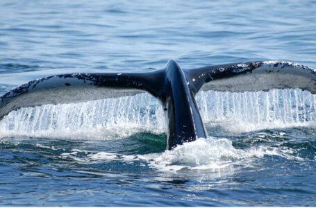Dogecoin balinaları köşeye çekildi